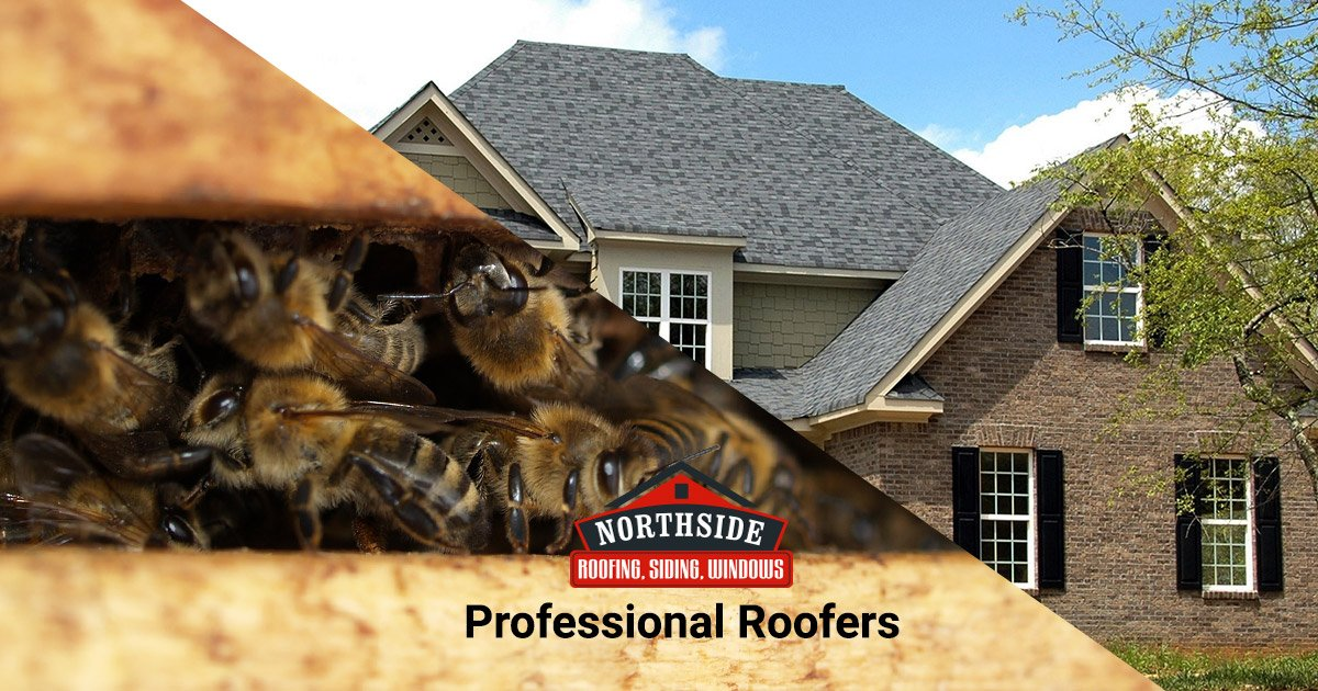 Professional Roofers Keep the Bees out!