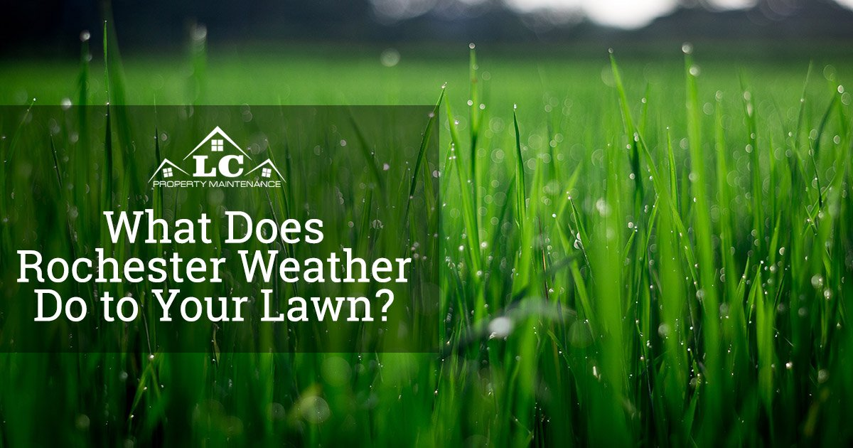 What Does Rochester Weather Do to Your Lawn?