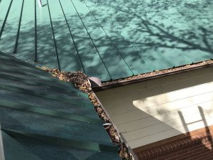 Clogged Gutter Solutions Dallas TX