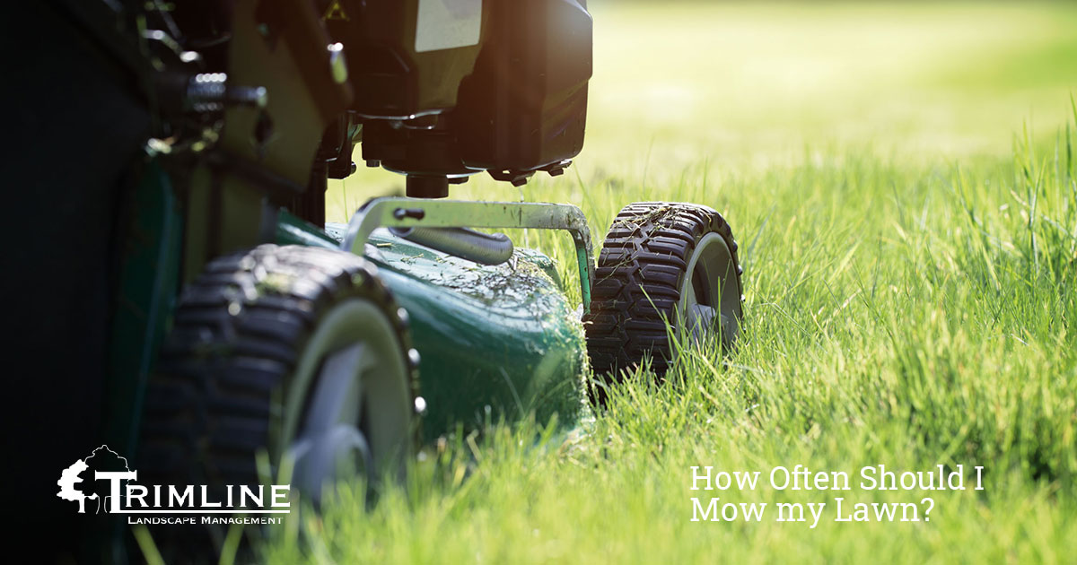 How Often Should I Mow my Lawn?