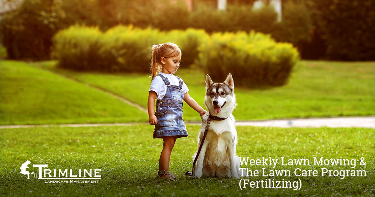 Weekly Lawn Mowing and Trimline Lawn Care Program