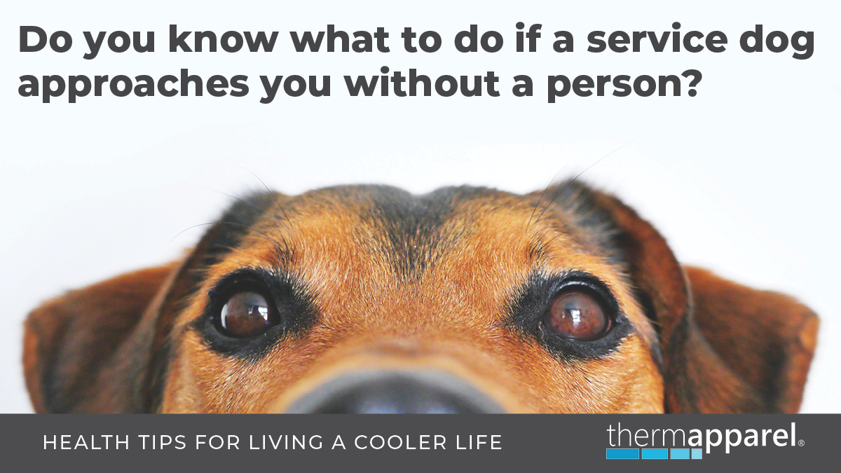 Do you know what to do if a service dog approaches you without a person?