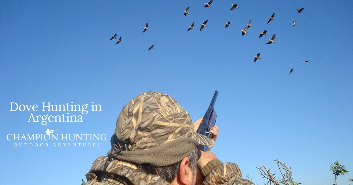 Guide to Dove Hunting in Argentina