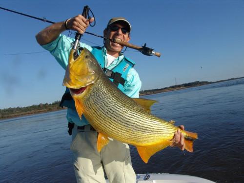 Huge Dorado Caught in Argentina
