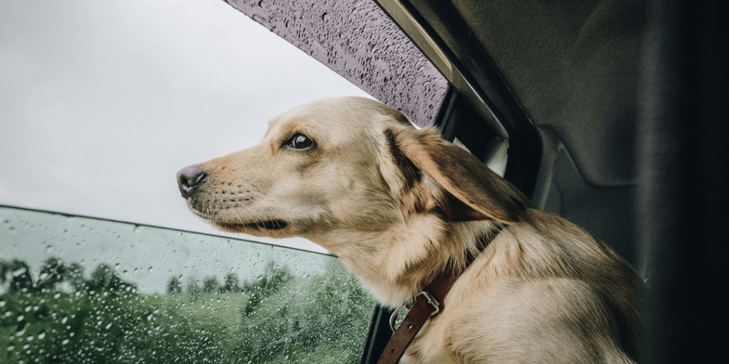 Tips for Road Tripping with your Pet