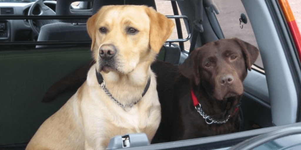8 Tips when Traveling with your Pets