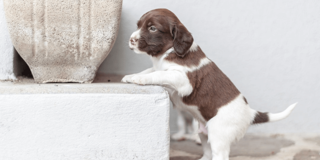 Helpful Tips For Raising A New Puppy