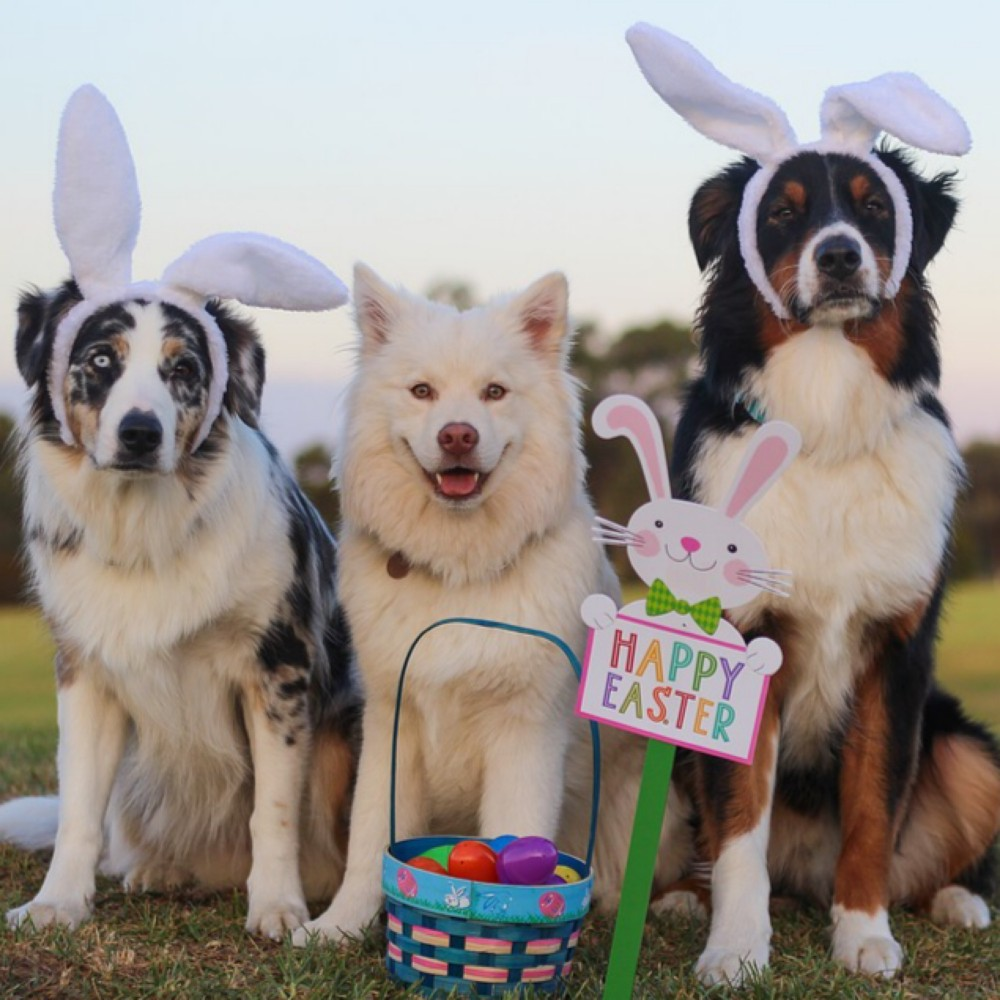 Keep Easter Happy with our helpful Tips