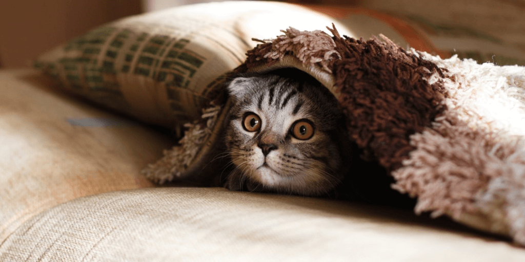 Tips for Adopting Kittens