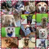 Senior Pets of APB