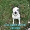 A1K's Buddha Babyboy Anderson