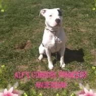 A1F's Cowgirl Princess Anderson