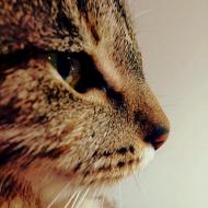 Tabbytha