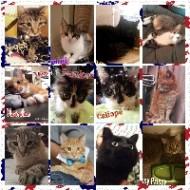 Cats of All Pet Brigade