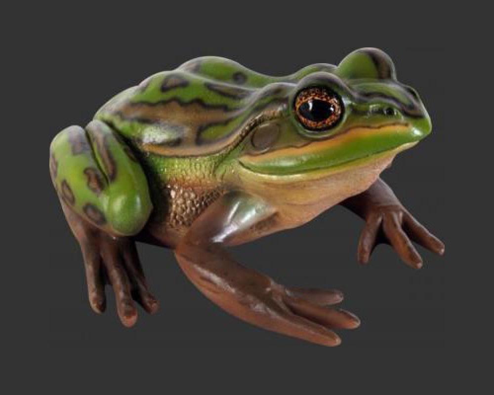 Frog - Green & Golden Bell Frog