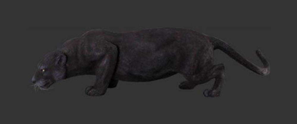 Panther - Black