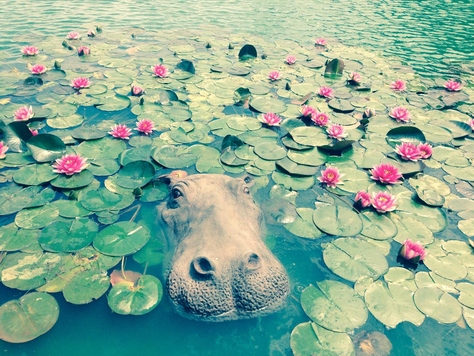 Floating - Hippo Head Large