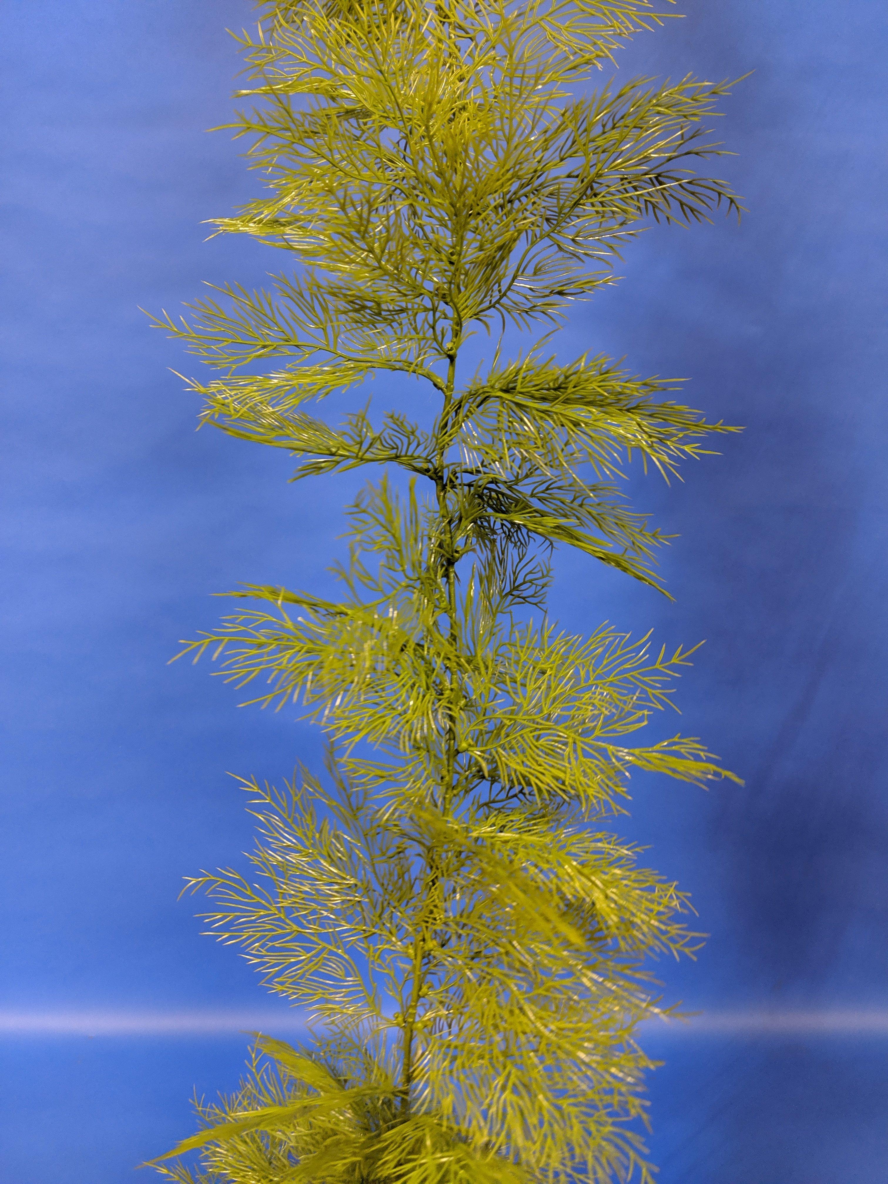 Kelp-002