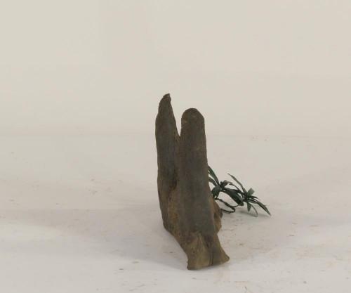 Cypress Knee - CK-002