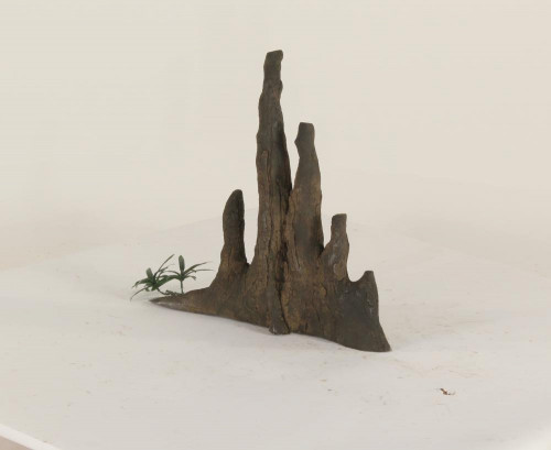 Cypress Knee - CK-005