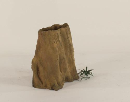 Cypress Stump - CS-002
