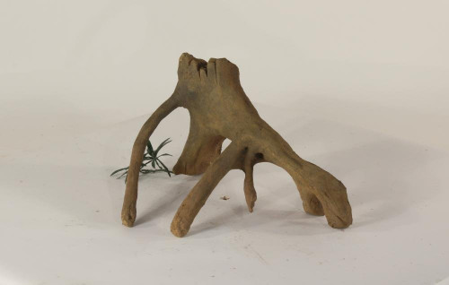 Mangrove Root - MR-002