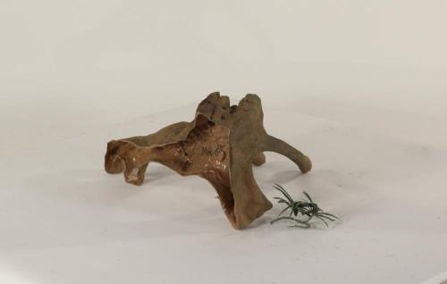 Mangrove Root - MR-002