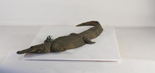 Floating - 8ft Alligator