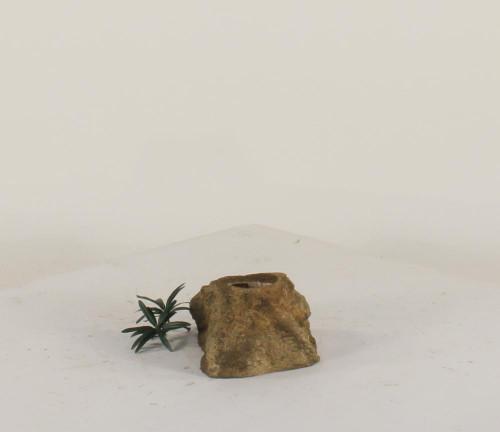 Pot Rock - 007