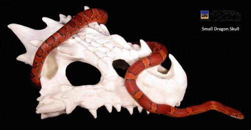 Small Dragon Skull
