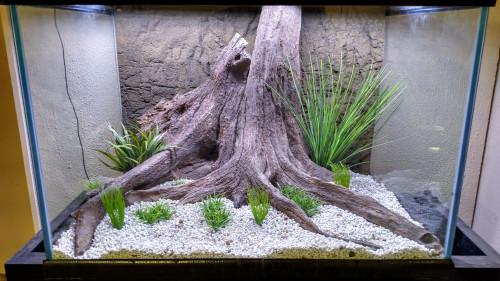 Tree Stump-008 (TS-008)