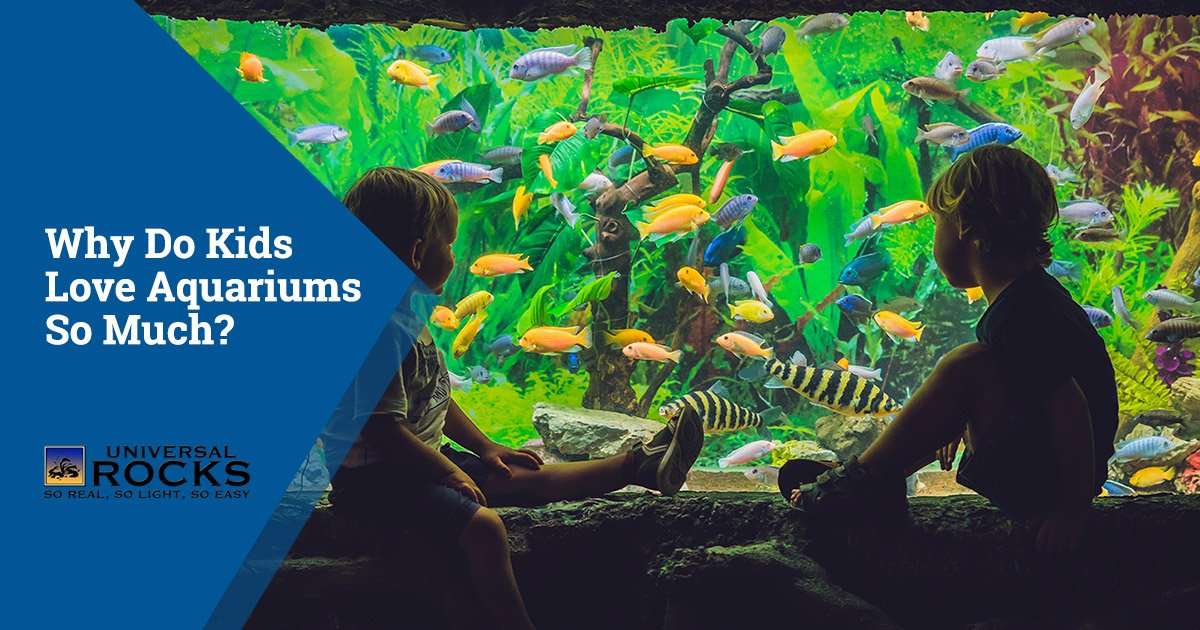 Why Do Kids Love Aquariums So Much?