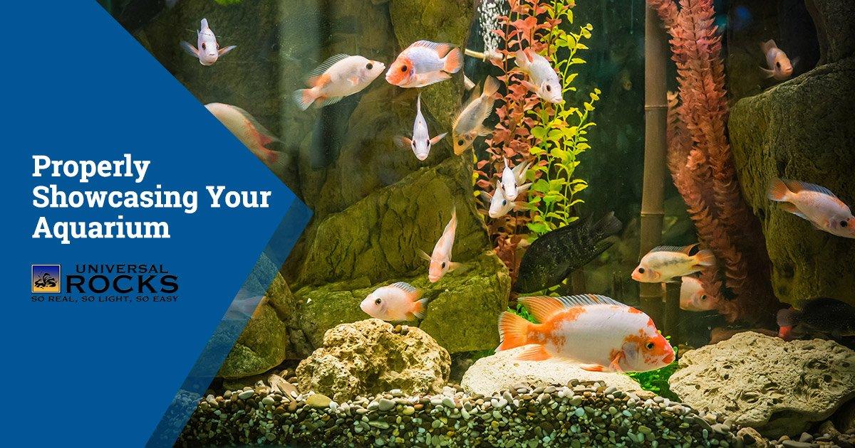 Properly Showcasing Your Aquarium