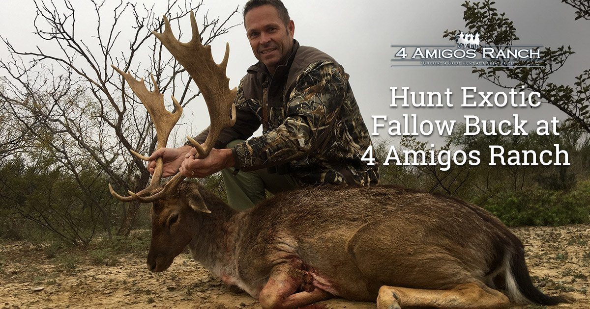 Hunt Fallow Bucks in Texas