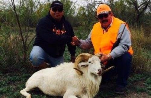 Ram Hunting in TX