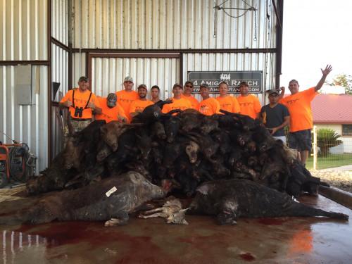 Hog hunting in TX