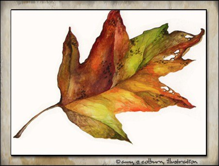 Autumn leaf 1998