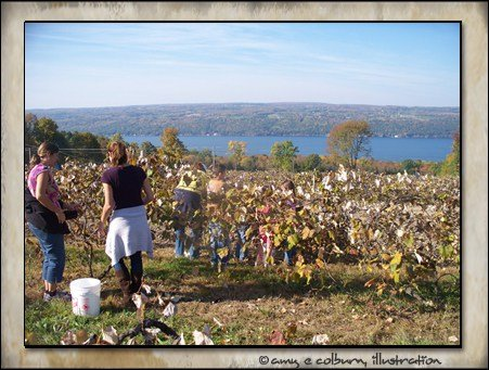 finger lakes distilling grape-picking day