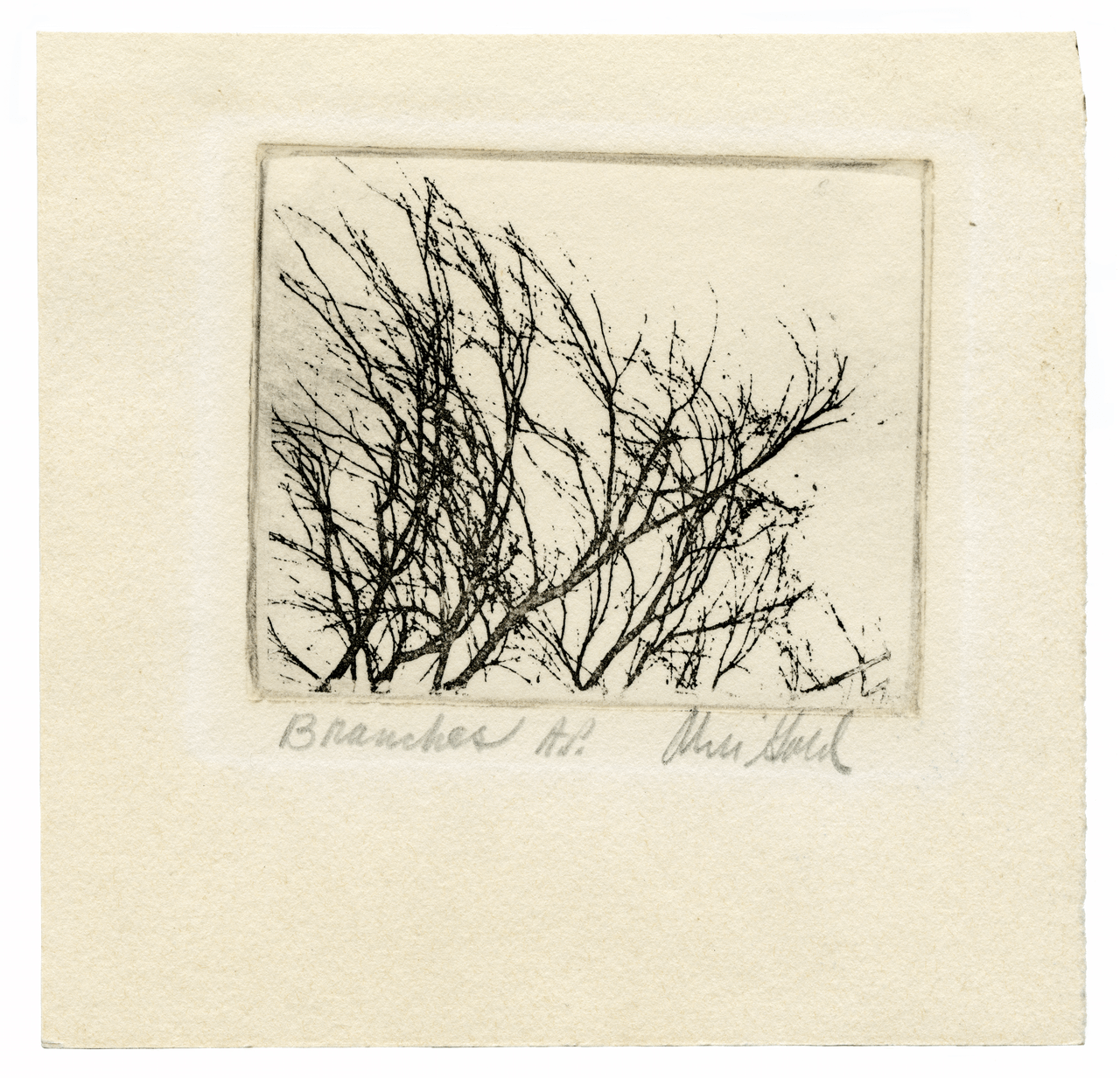 A Vintage Artist Proof Minimalist Botanical Etching 