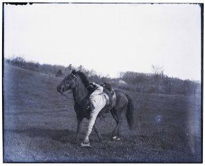 An Antique Glass Plate Negative Photograph Cowboy On Horse In Action