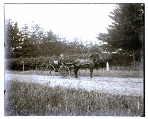 An Antique 19th Century Glass Plate Negative Man In Buggy Cart Horse