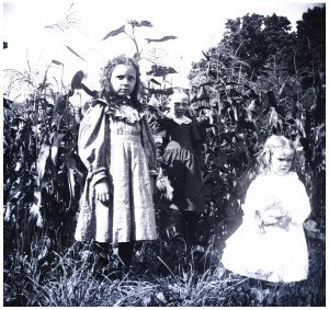 An Antique Glass Plate Negative Photograph Girls In The Corn Stalks