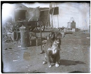 An Antique Glass Plate Negative Photograph Of A Hot Dog Near The Tool Shed