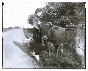 An Antique Glass Plate Negative Photograph Woman Tending to Cattle & Dog