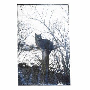 An Antique Glass Plate Negative Photograph Cat On Post On The Farm