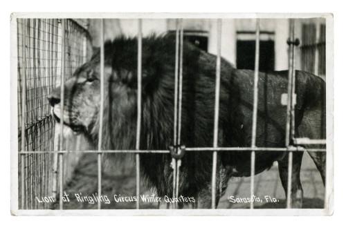 ringling circus postcard