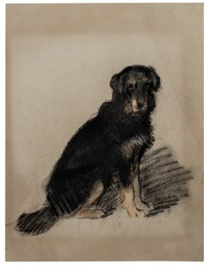 An Antique English Flat Coated Retriever Portrait Study Drawing Archibald Thorburn