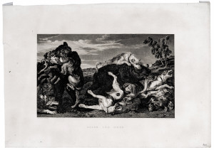 An Antique Engraving Print Bears and Dogs 1809 James Fittler Frans Snyders