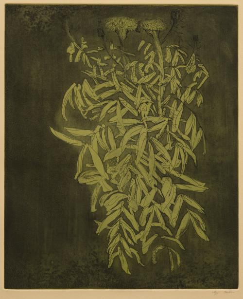 A Vintage Framed Leonard Baskin Colored Etching Marigold