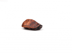 An Antique Wooden Netsuke Of A Turtle Signed Tomotada (Kyoto), Edo Period